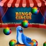 bingo bingocircus
