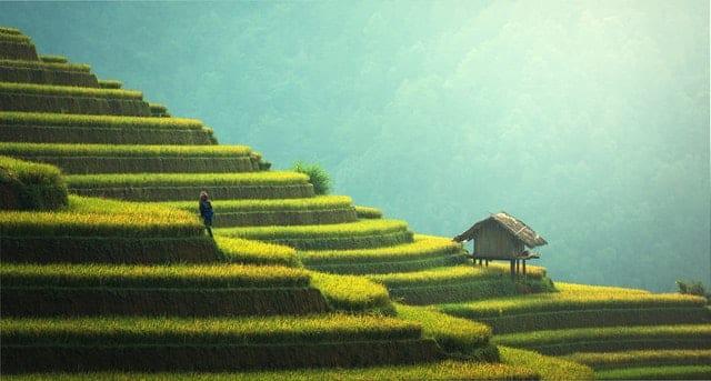 rizière cambodge