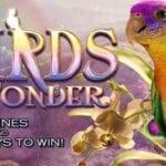 Slot vidéo Birds of Wonder de High 5 Games