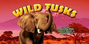 Slot vidéo Wild Tusks